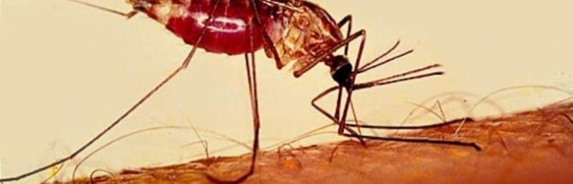Болезни. синдромы. симптомы — малярия
