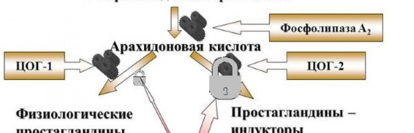 Аналоги мовалиса
