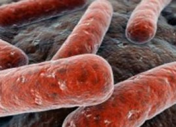 Глава 19 туберкулез легких