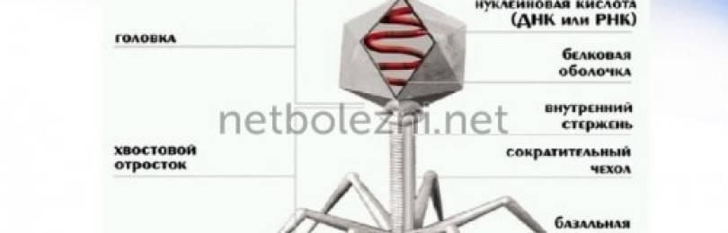 Бактериофаг коли: инструкция по применению, аналоги и отзывы
