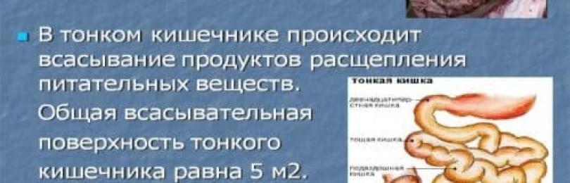 Метопролол: инструкция по применению, аналоги и отзывы, цены в аптеках россии