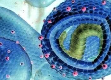 Генотип вируса гепатита с 1: диагностика и лечение