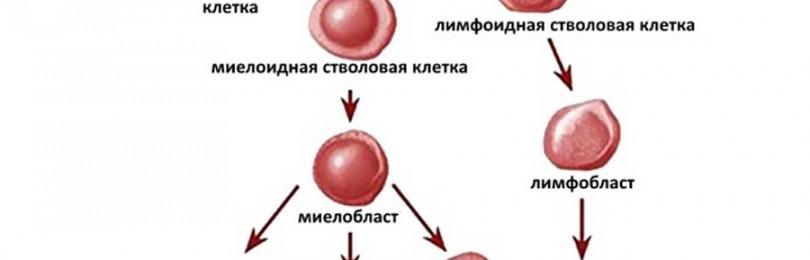 Ученые приблизились к излечению от лейкемии