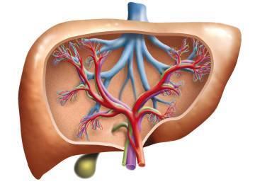Что такое гепатомегалия: признаки и лечение заболевания