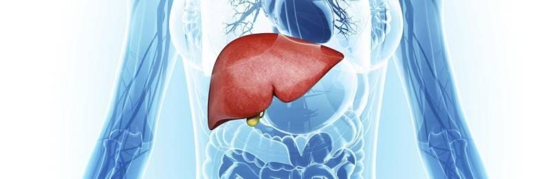 Роль печени в обмене углеводов жиров и белков