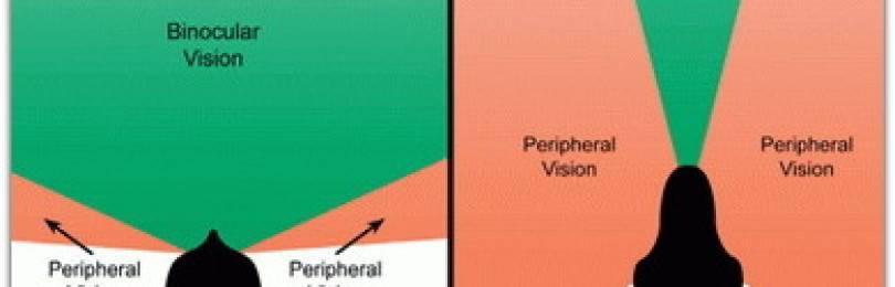 Периферическое зрение, его нарушения и упражнения для развития