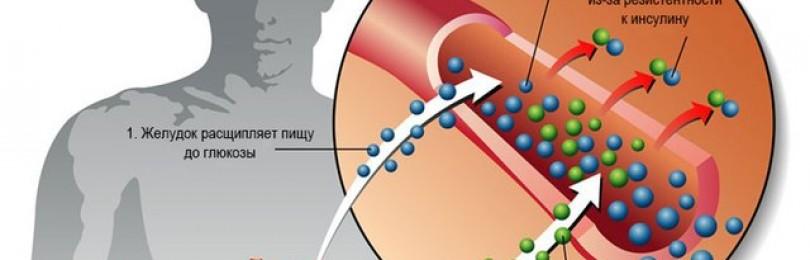 «тражента»: отзывы диабетиков, состав, показания и противопоказания