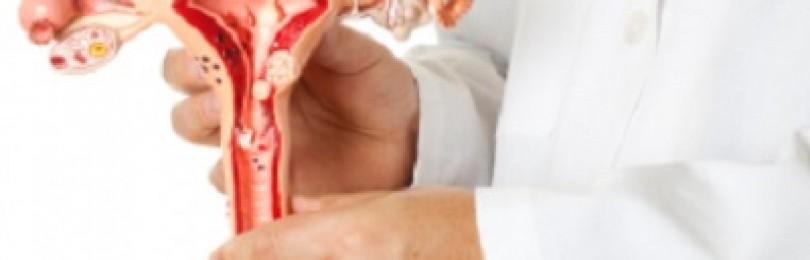 Эндометрий фазы секреции что это