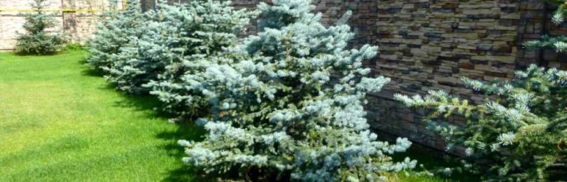Чем может быть опасна новогодняя елка в доме?