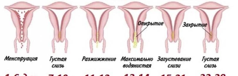 Причины жёлтых выделений у женщин с запахом, зудом и без дополнительных симптомов