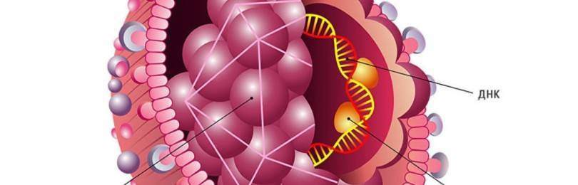 Количественный анализ на гепатит B