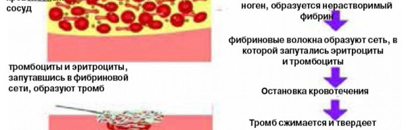 Значение эритроцитов и тромбоцитов. не функции а именно их значение