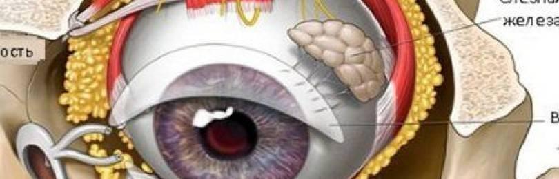 Пресбиопия: «климакс» глаз у мужчин и женщин