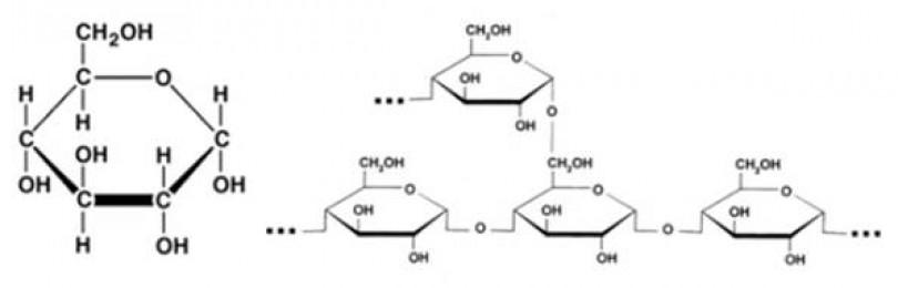 Тест на тему «углеводы» с ответами