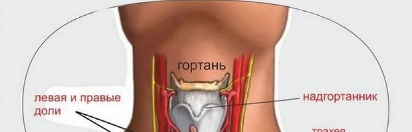 Неоднородная структура щитовидной железы: что это такое