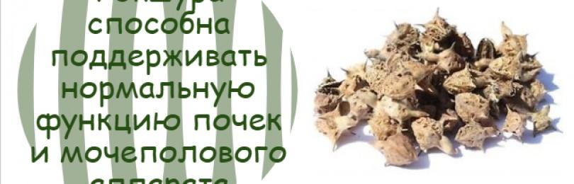 Описание растения гокшура и его полезных свойств