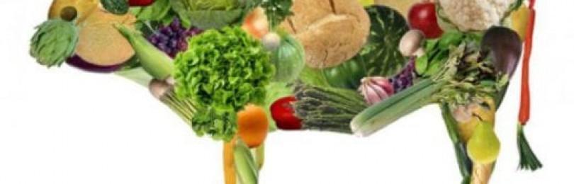 О пользе и вреде вегетарианства на основе личного опыта