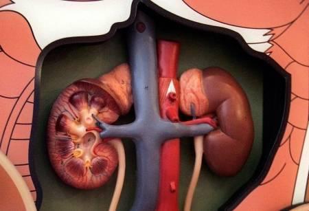 Опасная инфекция: почечный туберкулез. как проявляется и чем лечить