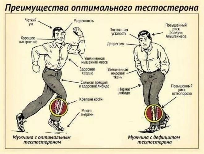 Тестостерон — что это такое, его норма у мужчин и женщин, как повысить уровень тестостерона   ktonanovenkogo.ru