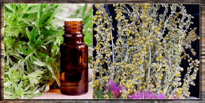 Настойка полыни от паразитов – рецепты и применение