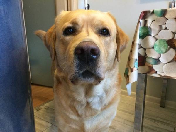 В каких случаях можно применять собачий жир при туберкулезе?