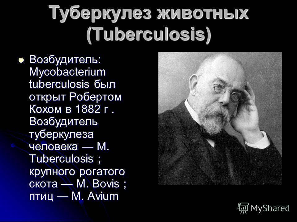 Туберкулез крс: разбираем досконально