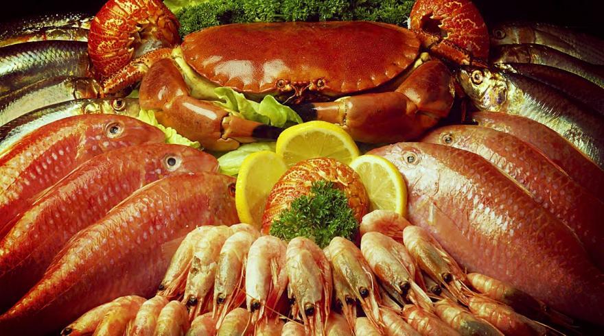 Морепродукты: польза и вред для здоровья человека