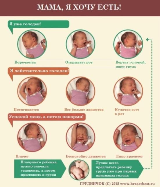 Как увеличить лактацию молока при грудном вскармливании - рекомендации кормящей маме