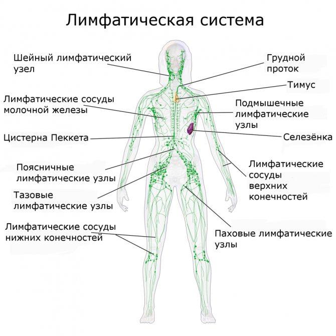 Лимфостаз - симптомы, лечение народными средствами