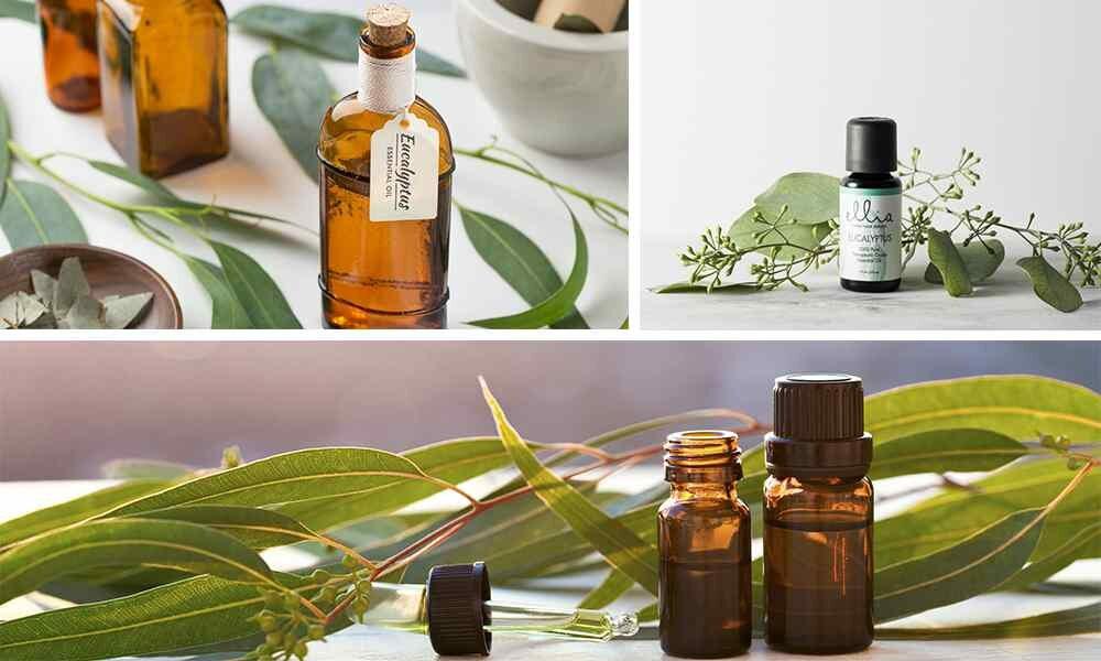 Эфирное масло эвкалипта: свойства и применение