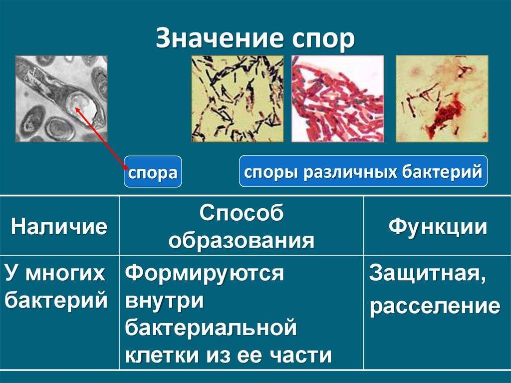 Вредные бактерии: где живут и какие вызывают болезни
