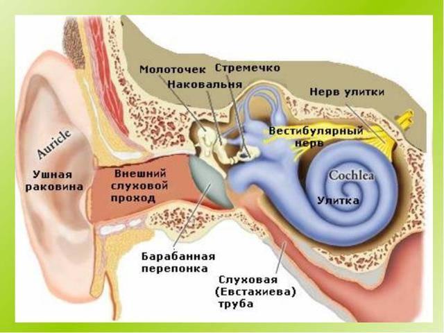 Камфорное масло в ухо: применение при отите, лечение