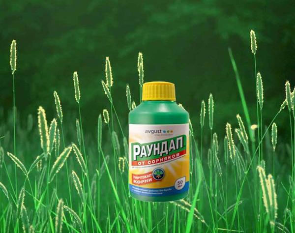 Как разводить и применять гербицид раундап от сорняков?