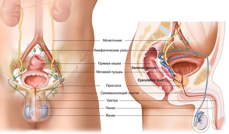 Простатит и мужская потенция: как связана железа с эректильной функцией?