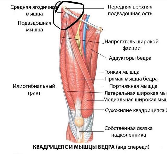 Мышцы кисти. мышцы ладонной впадины. мышцы thenar (тенара). мышцы hypothenar (гипотенера).