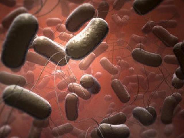 Пищевая токсикоинфекция: симптомы и лечение, виды, формы, стадии и диета при отравлении