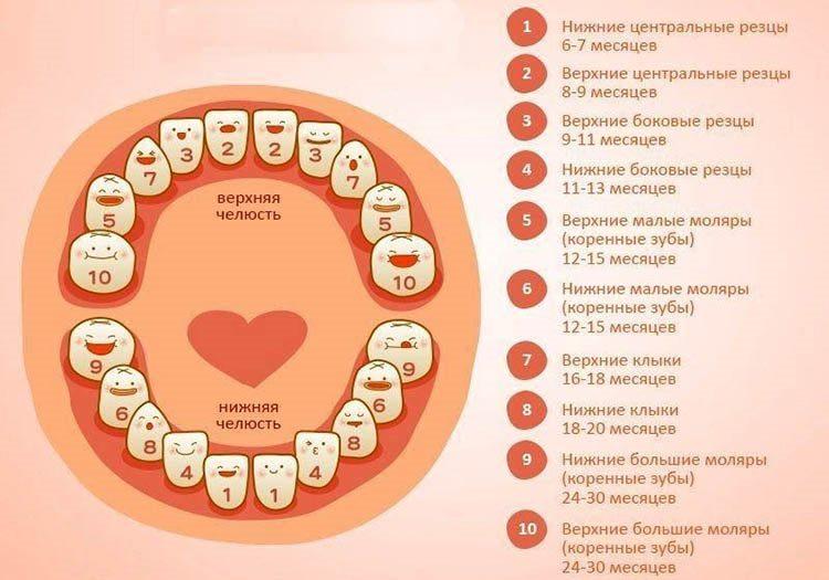 Молочные зубы у детей: сроки и схема выпадения