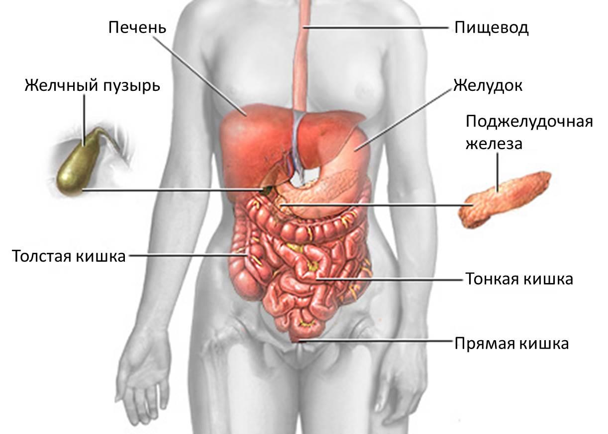 Что такое неинфекционный гастроэнтерит и колит неуточненный: симптомы, лечение и питание