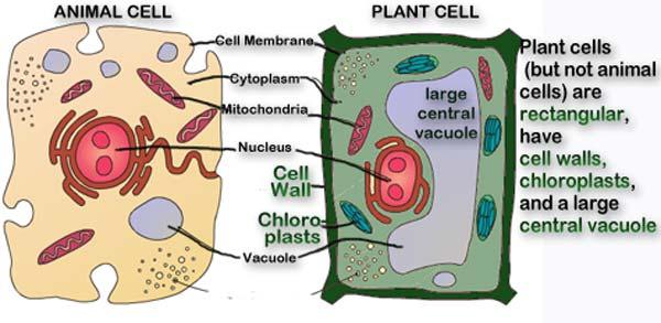Меланин в организме человека: что это и как его восстановить