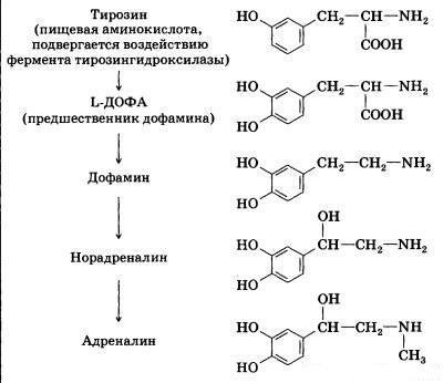 Адреномиметики и адренолитики средства, действующие на периферические адренергические процессы