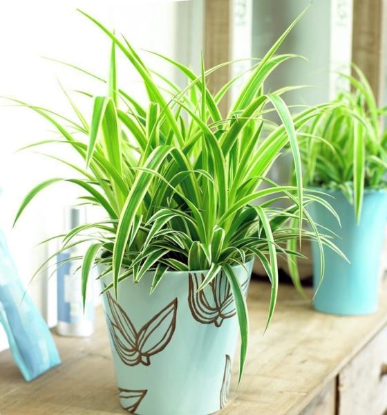 Какие комнатные растения очищают воздух