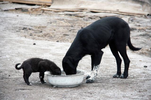 Отравление изониазидом у собак