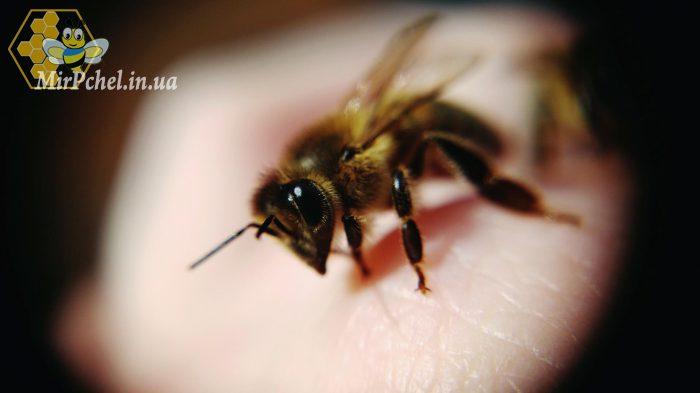Пчелиный яд – полезные свойства, показания, применение