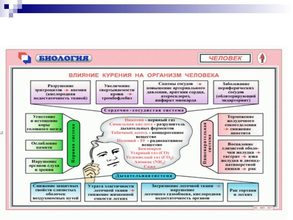 Влияние алкоголя на системы и органы человека