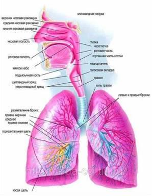 Лфк для детей при бронхиальной астме
