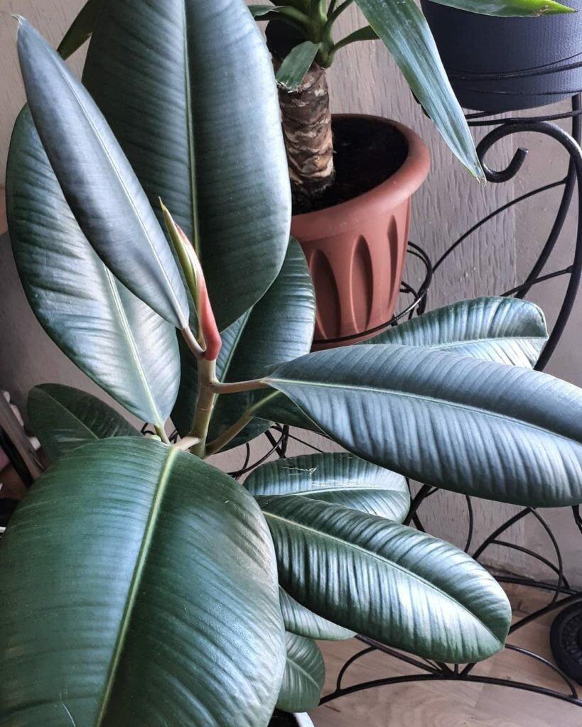 Комнатные растения, очищающие воздух в квартире