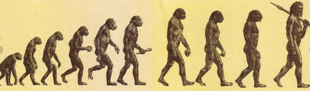 Картинка эволюции по дарвину