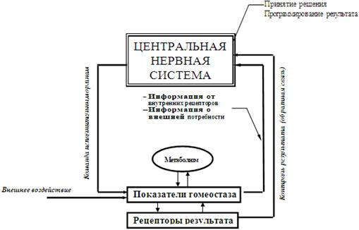 Гомеостаз — википедия