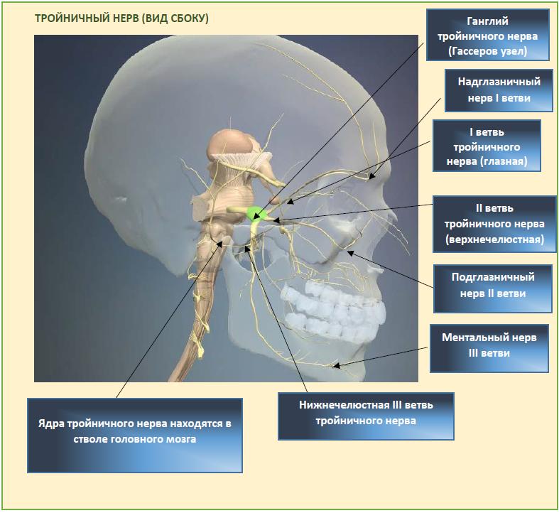 Болит голова в области лба - способы лечения и вероятные причины
