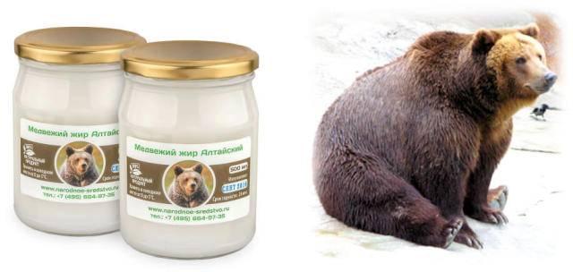 Медвежий жир от кашля:  все о беременности и детях
